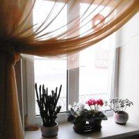 Мое зимнее окно :: татьяна