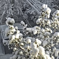 Ташкент, утро 4 февраля :: Светлана