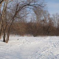Зимой солнце светит, да не греет. :: Andrey S.