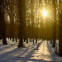 Солнечное февральское воскресенье :: Константин Тимченко