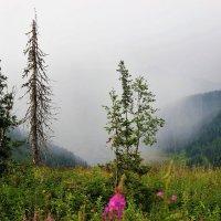 Дождь в долине :: Сергей Чиняев
