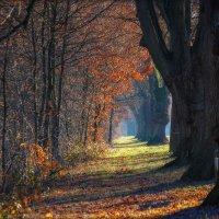 Осень. :: Юрий. Шмаков