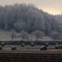 В полях под снегом и дождём. :: Юрий. Шмаков