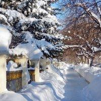 После снегопада :: Светлана Prolubshikov@