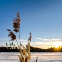 Winter :: Георги Димитров