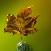 Вспоминая осень... :: Sergey Apinis