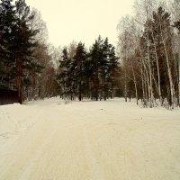 Сибирские смешанные леса. :: Мила Бовкун