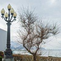 Дерево :: Варвара