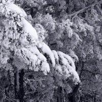 Мороз воевода  дозором.... :: Валерия  Полещикова