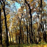 Осень. :: Николай Сидаш