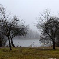 утро туманное... :: Сергей Короленко