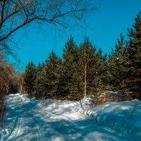Зимняя дорога. :: Rafael