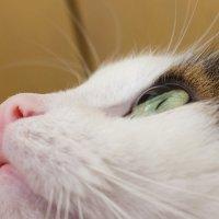 Сфера кота :: Gleipneir Дария