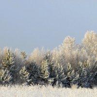 В зимнем убранстве.. :: nadyasilyuk Вознюк