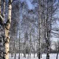 Скоро весна :: юрий Амосов
