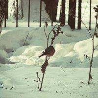 птичка на ветке :: Елена Мир