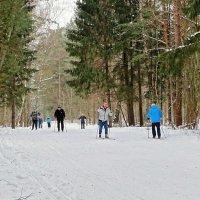 Все на лыжи! :: Милешкин Владимир Алексеевич