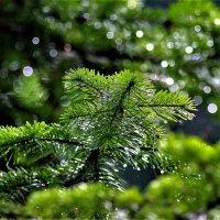 Лапка под дождём :: Сергей Чиняев