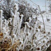 Зимние цветы :: Татьяна Смоляниченко