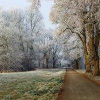 Деревья инеем покрылись. Всю ночь седые холода. :: Юрий. Шмаков