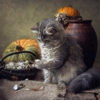 Специальные яйца для кошек :: Ирина Приходько