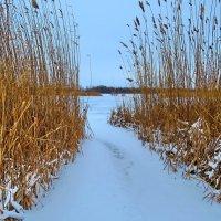 Зимний залив. :: Aleksey Litovchenko