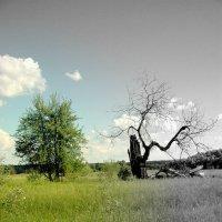 Новая жизнь :: Artem Lazarenko