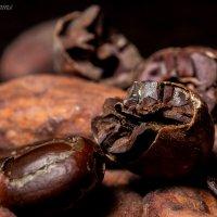 Какао-бобы :: Алёна