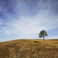 Вся прелесть одиночества... :: Ирина Лежнева
