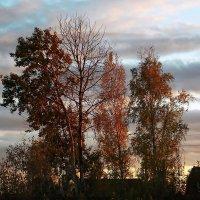 Осенний вечер :: Фотогруппа Весна.