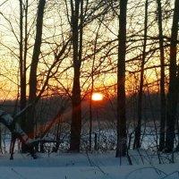 Морозное утро :: Вера