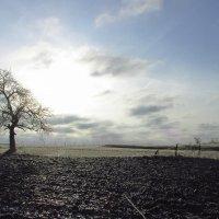 После ледяного дождя. :: Svetlana Baglai