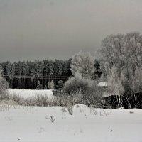 За околицей лес :: Николай Масляев