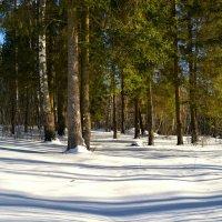 На опушке зимнего леса и воздух пахнет весной. :: Милешкин Владимир Алексеевич