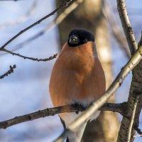 гордая птица :: Лариса Батурова