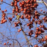 неведомые плоды :: Элен Шендо