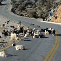 Долгая дорога в Сугию, Крит :: Владимир Брагилевский