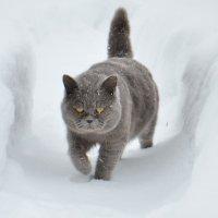 Лорд на прогулке :: Виталий Городниченко