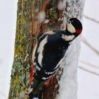 долбит в снегопад :: Александр Прокудин