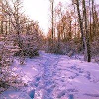 Зимняя прогулка :: Мария Богуславская