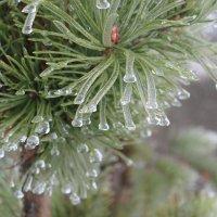 Ледяные украшения :: Наталья Березко