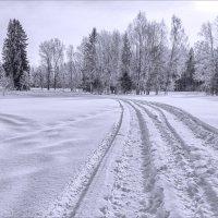 В зимнем лесу... :: Александр Никитинский