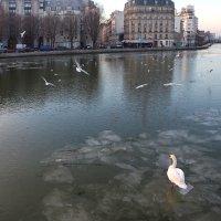 Ожидание Весны :: Фотограф в Париже, Франции Наталья Ильина
