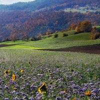 осень у подножия гор :: Elena Wymann