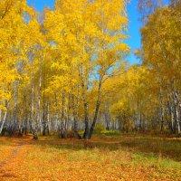 В осеннем лесу :: Влад