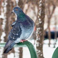 Гордый птиц... :: Владимир Голиков