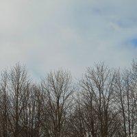 А небо синее :: Наталья Тимошенко