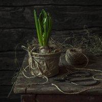 Весна не за горами :: Ирина Елагина