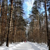 В лесу :: marmorozov Морозова