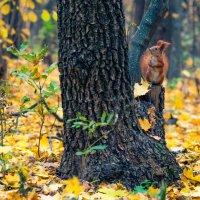 Осень... :: Денис Качанов
